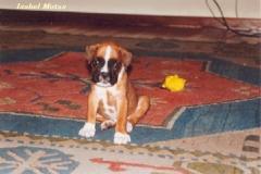 Recordando a Bolo, el cachorrito de Isabel y Manuel
