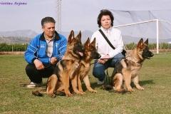 Los cachorros del afijo Lobo Moro, de Dani y Dolores, en un día de exposición
