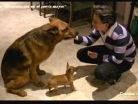 09 Mis queridos perros