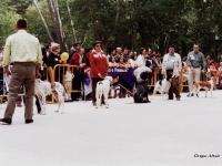 08 Grupo mestizos de caza