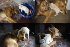 Karin hizo de mama adoptiva con Sandy, de 35 dias