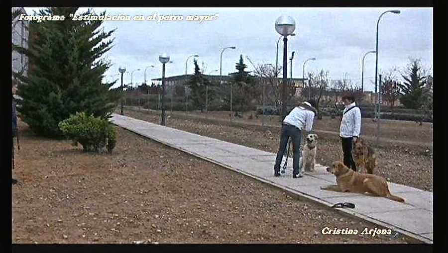 Trabajos colectivos para ajustar la obediencia_Rubio, de Beatriz; Cleo y Karín
