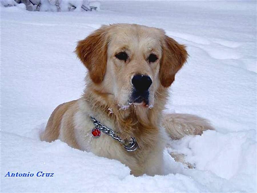Djanko entrenando en la nieve
