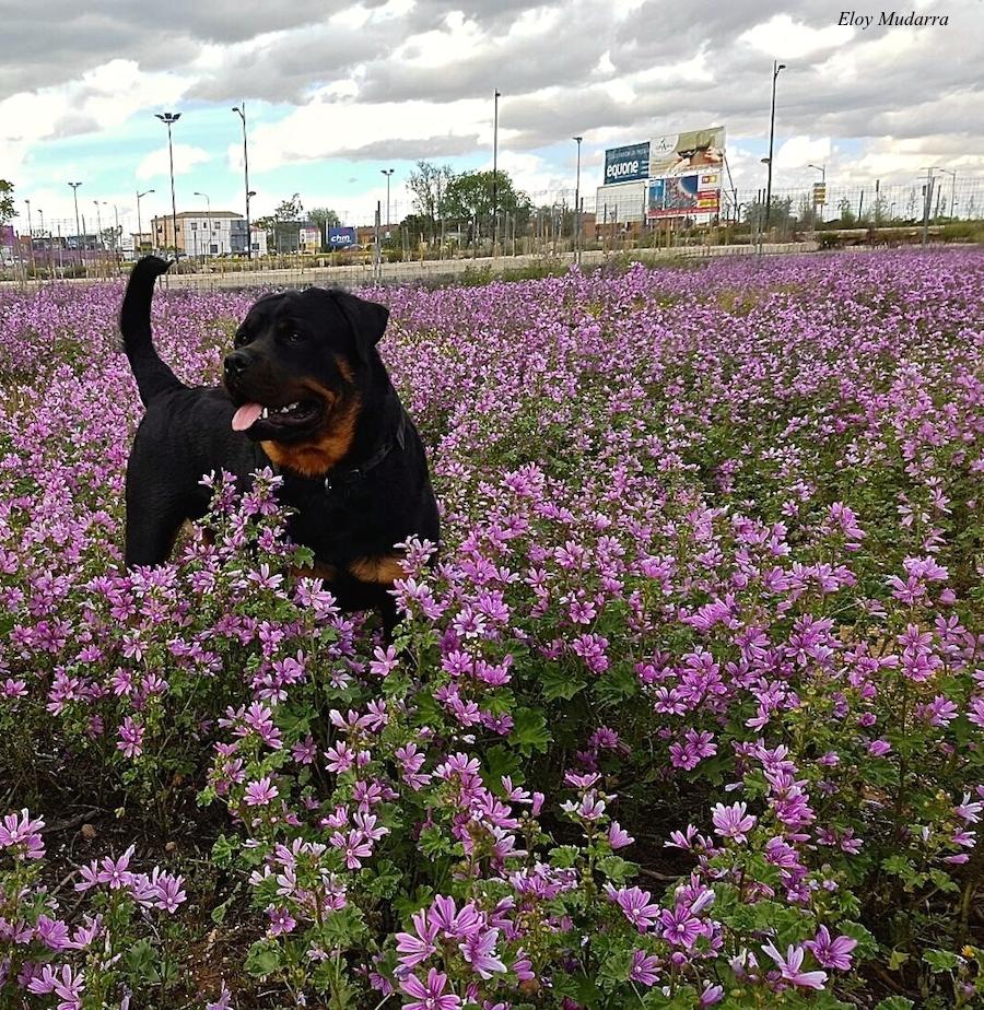 82 Kika juega entre las flores