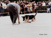 13 Mostramos al perro inteligente